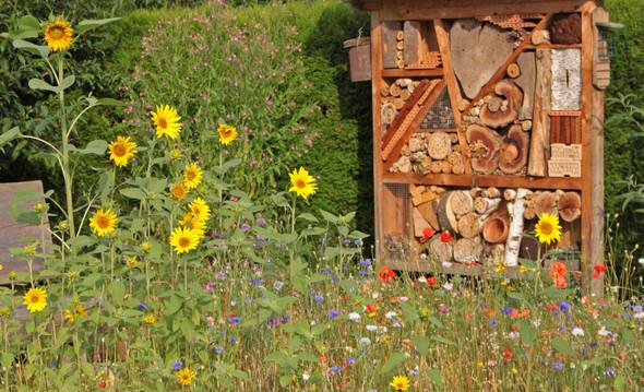 Wie Wird Aus Einem Grünen Rasen Eine Blumenwiese Garten