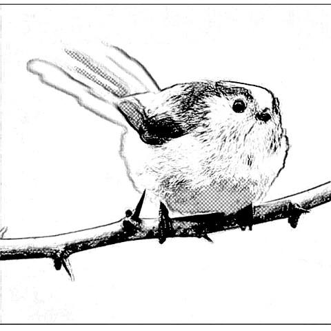 Bleistift - (Bilder, App, Zeichnung)