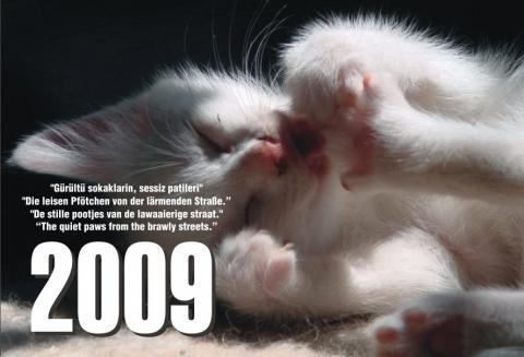 """Kalender 2009 """"Die leisen Pfötchen von der lärmenden Strasse"""" - (Tiere, Katzen, Kater)"""