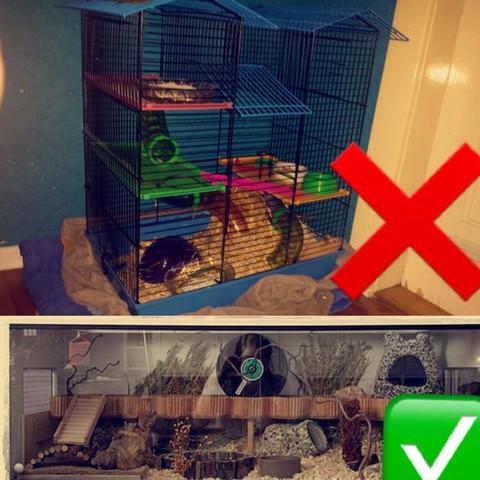Ungeeignet und geeignet  - (Hamster, Infos)