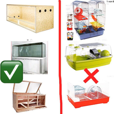 Top und Flop  - (Hamster, Infos)