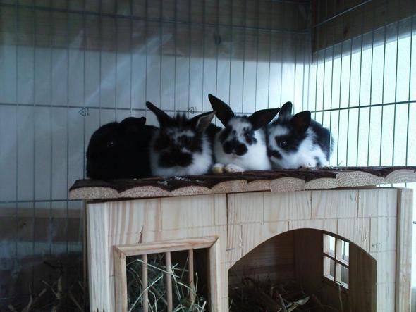 Meine süßen Hasenbabys - (Kaninchen, Hasen, Vergesellschaftung)