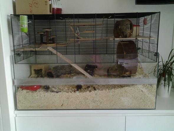 der Käfig - (Hamster, kratzen, Goldhamster)