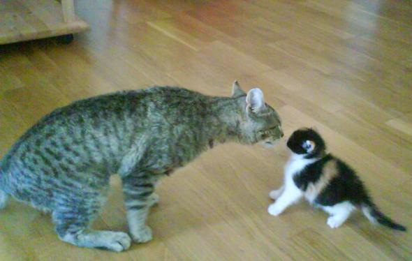 Beim Kennenlernen - (Leben, Katzen, Verträglichkeit)