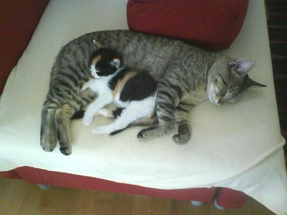 Kuscheln - (Leben, Katzen, Verträglichkeit)