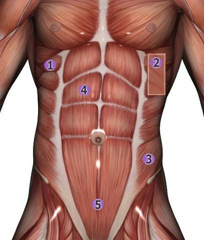 Warum sind so viele am unteren Bauch so dick? (Sport, abnehmen, Fitness)