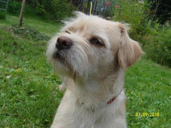 """Unser """"Straßenhund"""" Jamy - (Tierheim, Problemhund, aggressiver Hund)"""