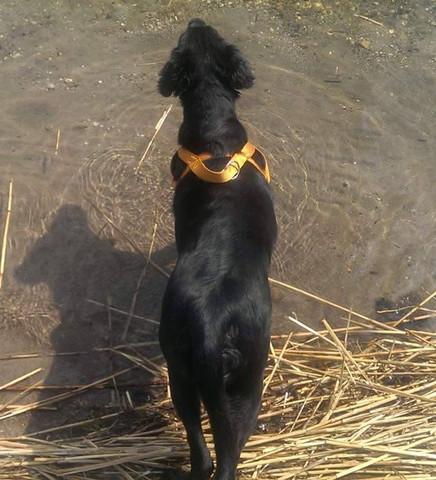 - (Hund, Tiermedizin, Tierphysiotherapie)