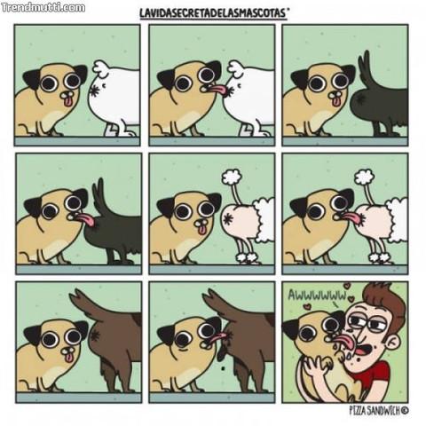- (Tiere, Hund, gassi)