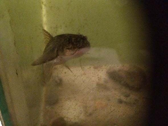 Fisch  - (Fische, angeln)