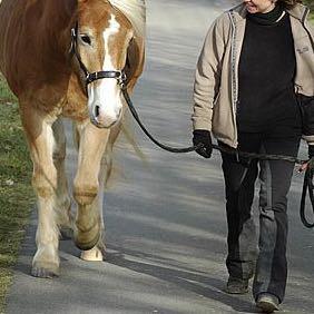 Richtiges führen vom Pferd  - (Pferde, Pony, Rat)