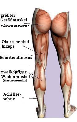 - (Körper, Menschen, Anatomie)
