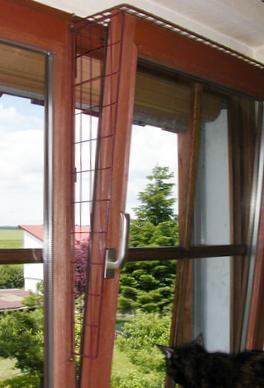Katzen Und Gekippte Fenster Katze Haustiere