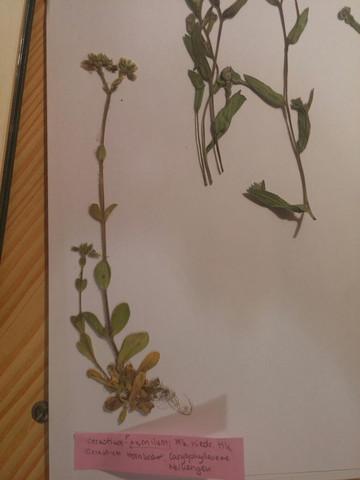 - (Biologie, Garten, Pflanzen)