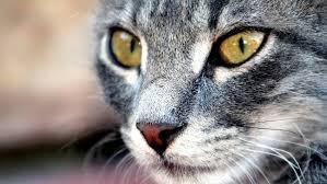- (Tiere, Menschen, Katze)