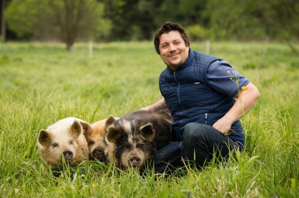 Kune Kune Schweine in der Edermühle im Waldviertel - (Bayern, Schwein, Bauernhof)