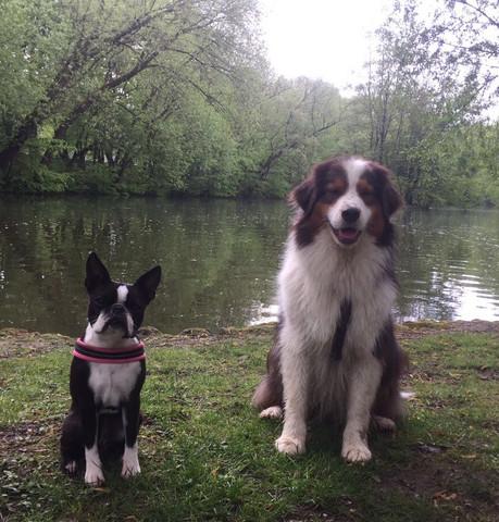 Froni und Baily  - (Hund, Welpen, Züchter)