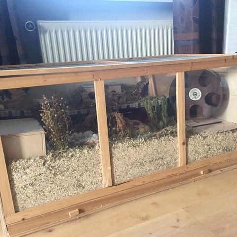 So sollte ein Hamster Gehege aussehen  - (Hamster, Käfig, haeuschen)
