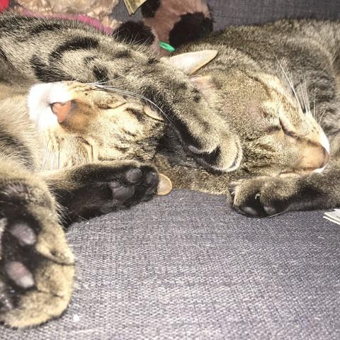 Meine 2 Katzen - (Tiere, Menschen, Katze)