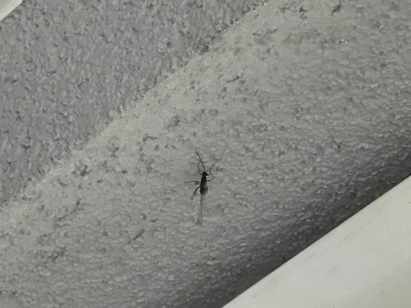 2/2 - (Natur, Insekten)