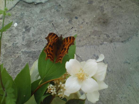 Das ist Rosi (: - (Tiere, Behinderung, Schmetterling)