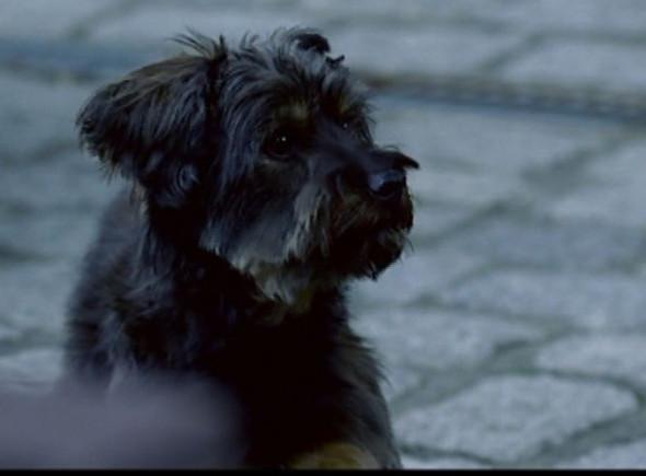 - (Hund, Filme und Serien, Hunderasse)