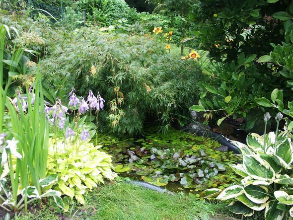 Kleiner Teich1 - (klein, Teich, vorgarten)