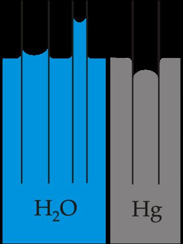Kapillarwirkung - (Baum, Wassertransport, kapillarwirkung)