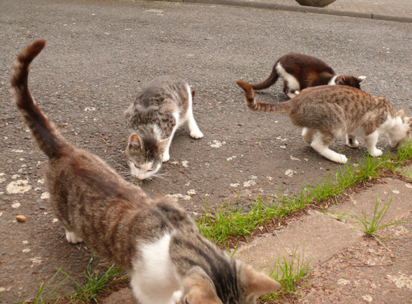 aus der damaligen Katzenschwemme, des ehemaligen verstorbenen Nachbarn. - (Hund, Gesundheit und Medizin, Katzen)