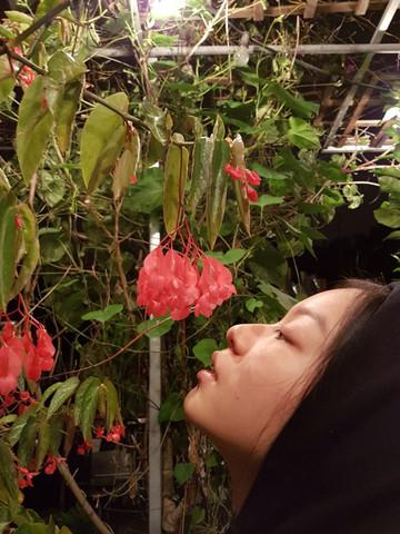 Pflanz - (Pflanzen, Natur, Blumen)