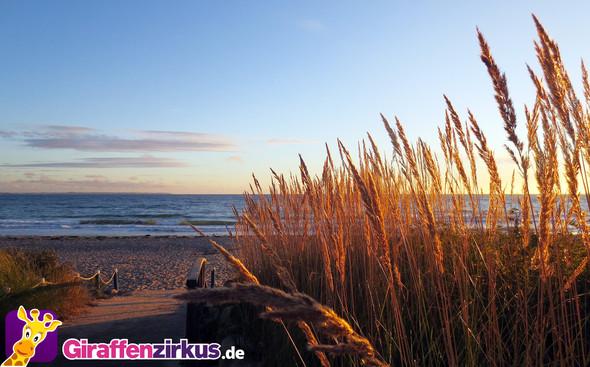 Giraffenzirkus.de - (Urlaub, Reise, Ostsee)
