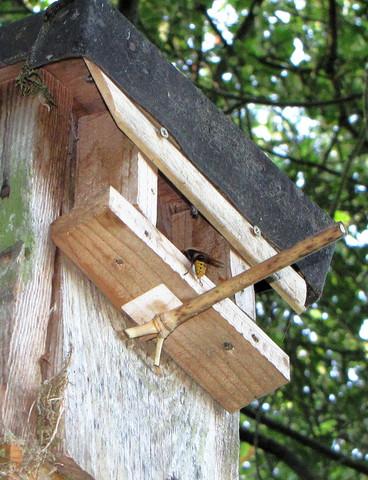 Hornissenkasten - (Hornissen, Fraßschaden)