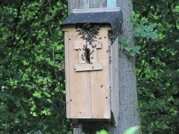 Bienen - (Hornissen, Fraßschaden)