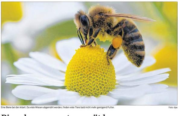 auf einer Blume - (Freizeit, Bienen)