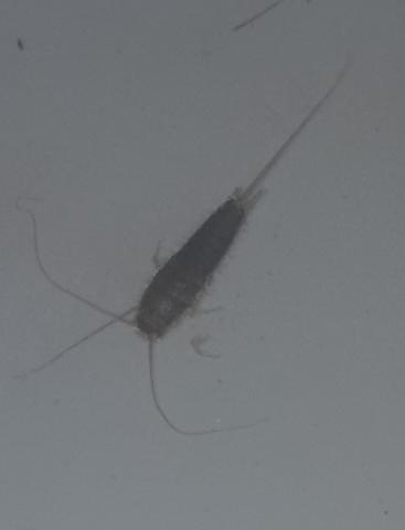 Wohnzimmer  - (Tiere, Insekten, Kakerlaken)