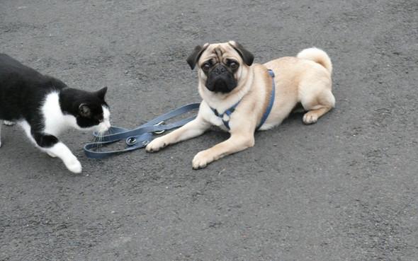 - (Tiere, Hund, Katze)