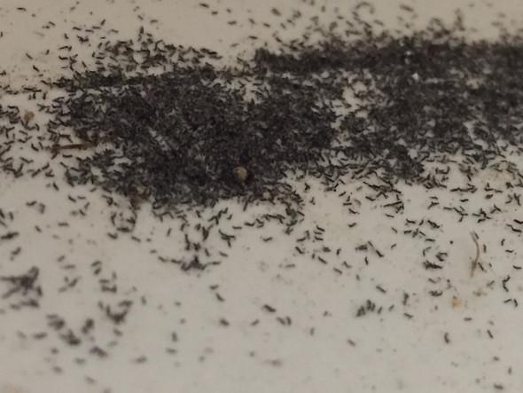 - (Insekten, Keller)