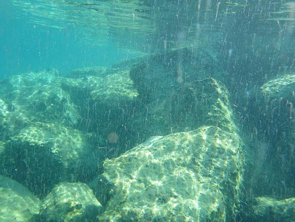 Kleinlebewesen im Mittelmeer  - (Lebewesen, Mittelmeer)