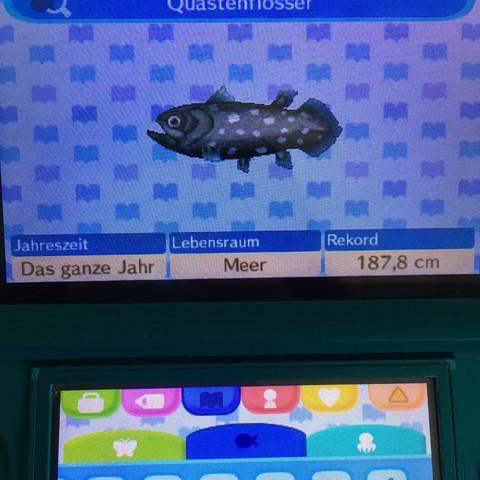 Quastenflosser  - (Fische, Animal-Crossing, angeln)