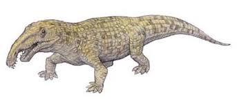 Archosaurus rossicus - (Tiere, Vögel, Evolution)