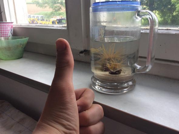- (Aquaristik, Korallen, anemone)