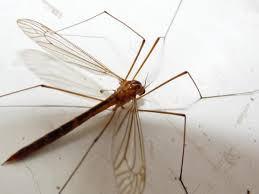 01 - (Wohnung, Insekten, Mücken)