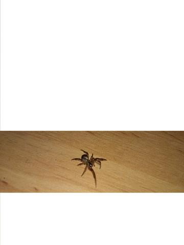 Hier die Spinne! - (Tiere, Natur, Spinne)