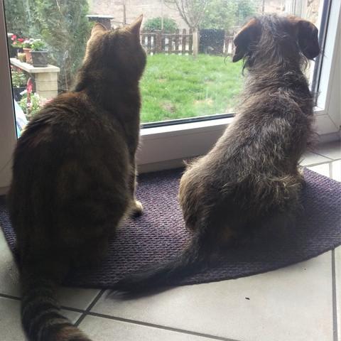 ... - (Tiere, Hund, Katze)
