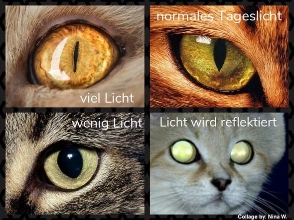 Pupillen  - (Tiere, Augen, Katze)