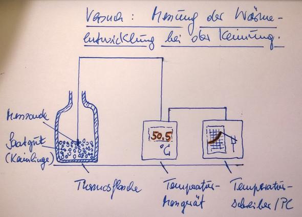 Messung der Wärmeentwicklung bei der Keimung - (Chemie, Biologie, Hausaufgaben)