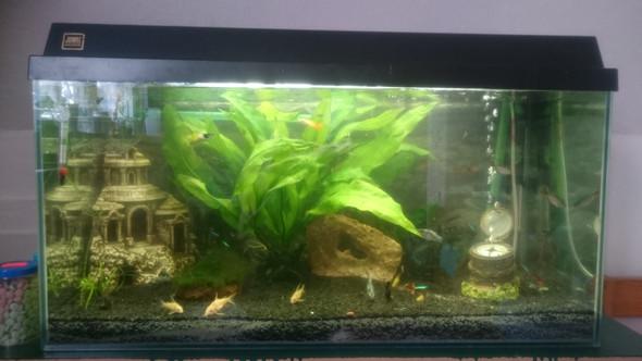 - (Pflanzen, Aquarium, Algen)