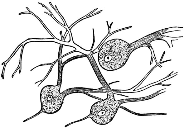 Gewebe: Nervengewebe - (Bio, Bausteine von bio)