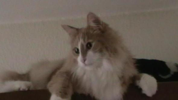 Kasi - (Tiere, Katze, Hauskatze)