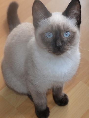 Frau Nilsson vor einem halben Jahr - (Tiere, Katze, krank)